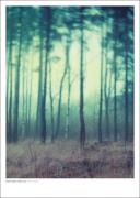 Plakat Fairyland 50x70 cm